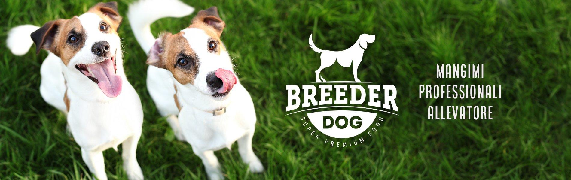 Breeder Dog